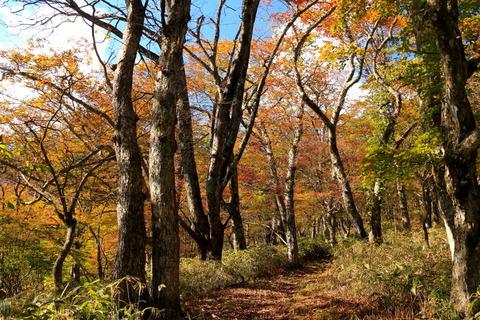 秋の森を散策する!(高原山山塊守子の森!)