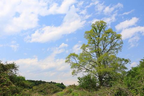 """緑豊かな""""里山の森""""を散策!"""