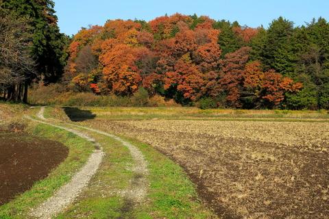 秋色真っ盛りの里山の森!