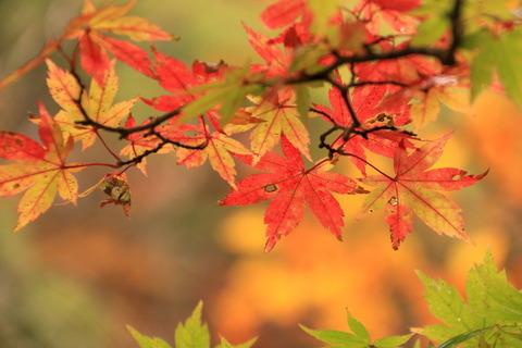 曇天なる秋色を求めて歩く!