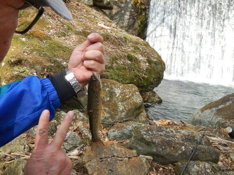 春渓で渓流釣り & 美味しランチ!
