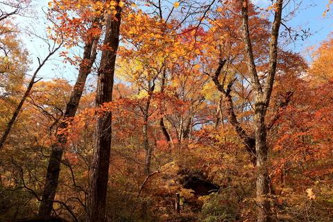 栃木県民の森の宮川渓谷歩道で秋色に包まれる!