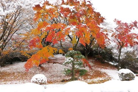 雪と紅葉のコラボ!(佐久山御殿山公園)