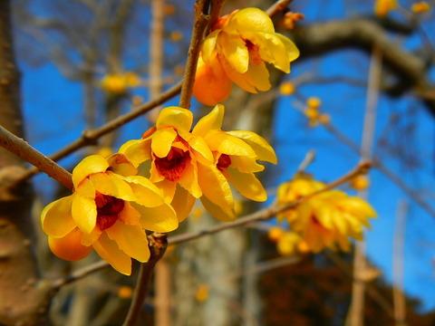 羽黒山(栃木百名山:2時間ちょっとの散歩道、小さな春が待っていた。!)