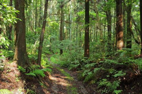 里山の森_2021.07.14_107