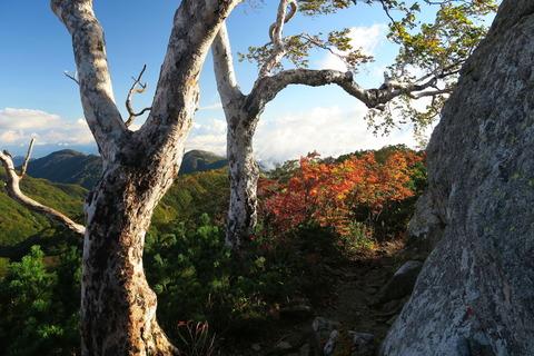 初秋の飯豊連峰を歩む!(3日目:切合避難小屋~地蔵岳~大日杉)