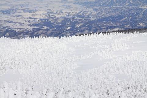 樹氷が原のモンスター(福島県吾妻山連峰を歩く!)