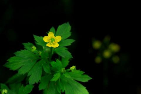 里山の森_19.05.16_023