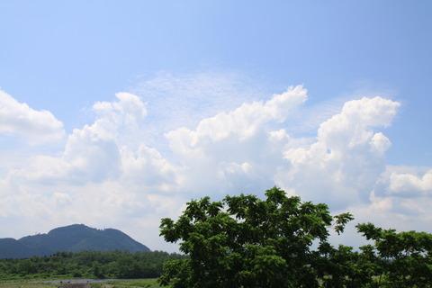 鬼怒川堤防沿いを散策する! 夏の草花 2011/07/12 栃木県さくら市