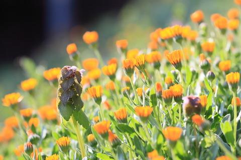 春の光につつまれた草花の群生を見つけました!《さくら市早乙女》
