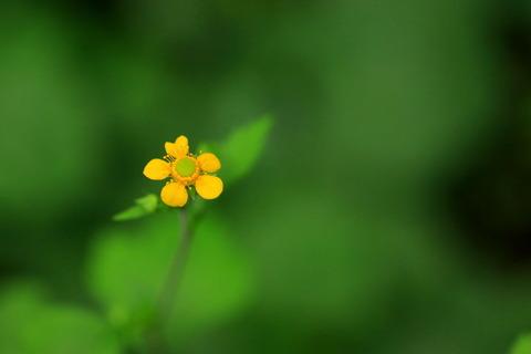 里山の森_2021.07.14_313