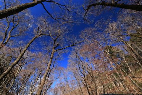 青空を従えて宮川渓谷歩道!