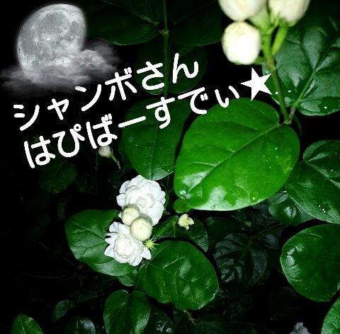 bb6f1c81.jpg