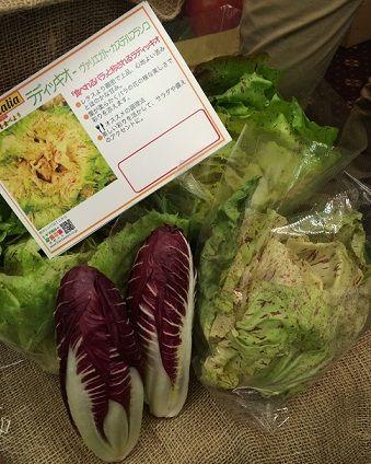 イタリア野菜3