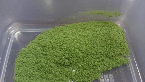 中島菜 (2)