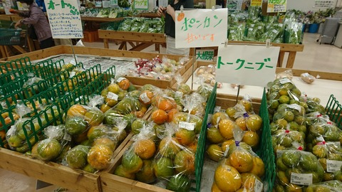 沖縄柑橘1