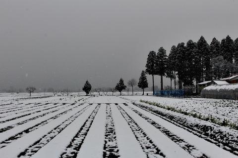 ソラマメ畑