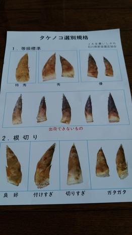 筍 (2)