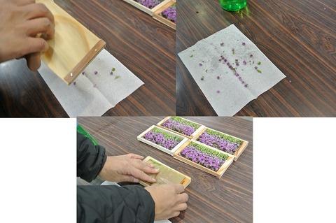 紫蘇の花掃除