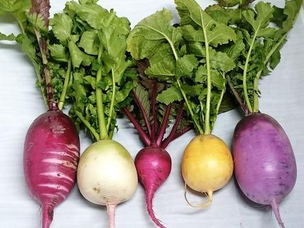 カラフル根菜5