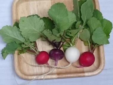 カラフル根菜16
