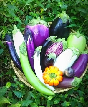 カラフル根菜15
