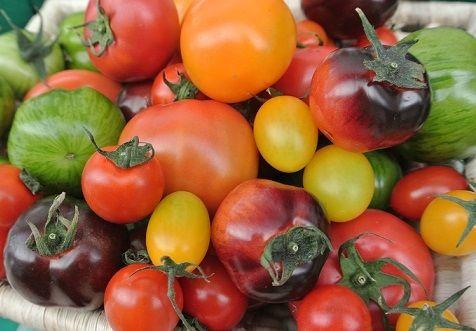2013トマトサミット全体