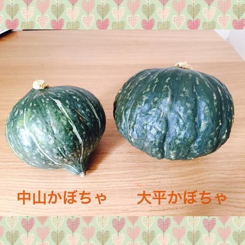 かぼちゃ写真