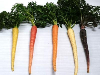 カラフル根菜2