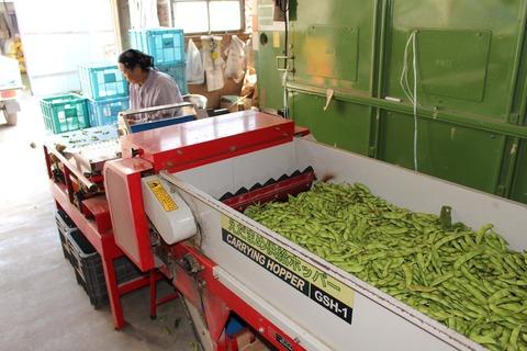秋田の枝豆