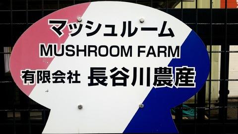 長谷川農産社名看板