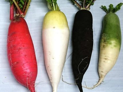 カラフル根菜3