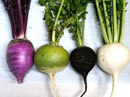 カラフル根菜4