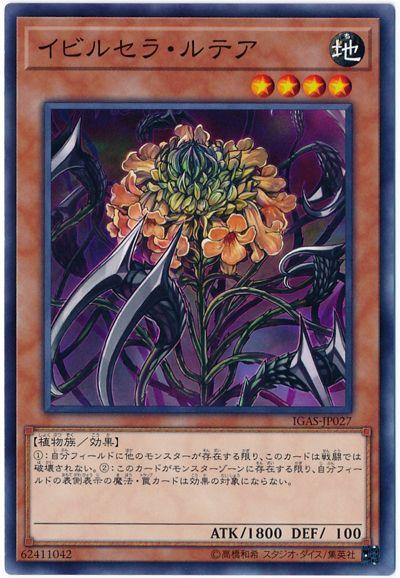 card100177017_1