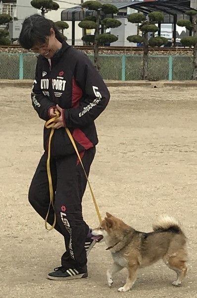 【犬】迷子犬、殺処分から一転、警察犬へ挑戦 シバイヌ「愛ちゃん」