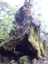 途中にあった木