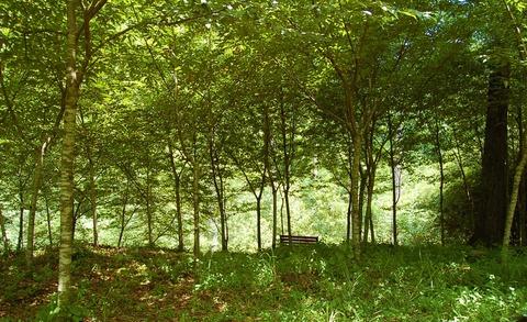 人生は森の中の一日  長田 弘