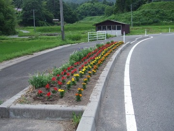 H23ビオラの花壇夏