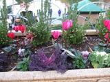 チボリの花壇
