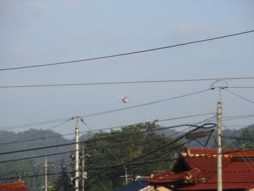 ヘリコプター消毒散布