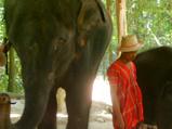 象で絵を描く、できるか