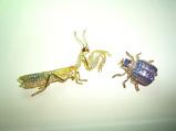 カマキリと謎の虫