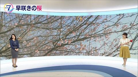 kikuchi18011802