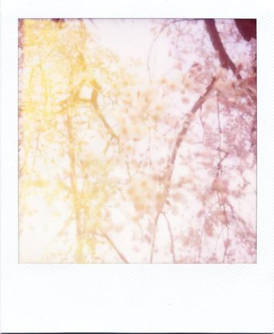 2017-3-桜