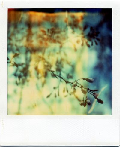 2017-3-桜70
