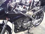 xelvis-mc25ws20120608 (4)