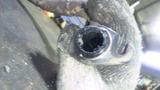 gyro-x20111019wsws (6)