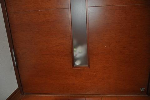 廊下のネコ2