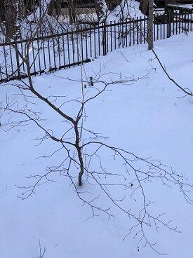 雪だものでなつはぜ