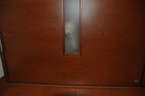 廊下のネコ3